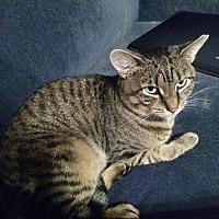Adopt A Pet :: Nappin' Jerry - Philadelphia, PA