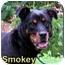 Photo 1 - Rottweiler Mix Dog for adoption in Aldie, Virginia - Smokey