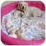 Photo 4 - Bichon Frise Mix Puppy for adoption in La Costa, California - Candy