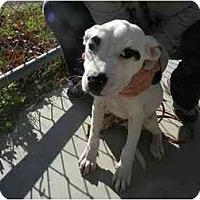 Adopt A Pet :: Harley - Alexandria, VA