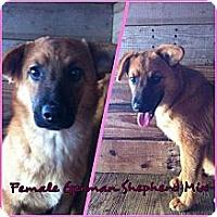 Adopt A Pet :: german shepard - Donaldsonville, LA
