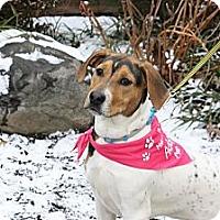 Adopt A Pet :: Wendy - North Wales, PA