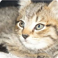 Adopt A Pet :: Ross - Xenia, OH