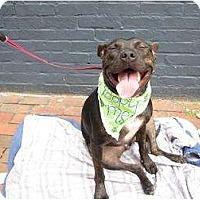 Adopt A Pet :: Rita - Alexandria, VA