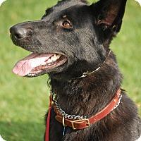 Adopt A Pet :: Julie - Altadena, CA