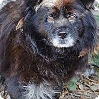 Adopt A Pet :: Robbie - Brooksville, FL