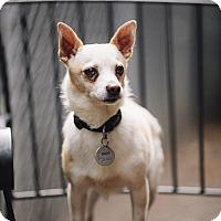 Adopt A Pet :: Hugo Boss - Portland, OR