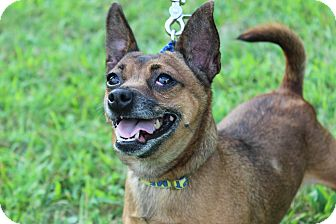 Beagle Mix Dog for adoption in Danville, Illinois - SASSY
