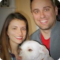 Adopt A Pet :: Leo - Plain City, OH