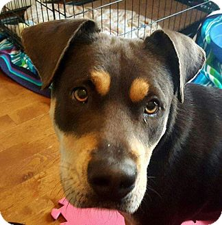 Mixed Breed (Medium) Mix Dog for adoption in Mount Hope, Ontario - Pebbles