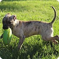 Adopt A Pet :: Bambina - Winchester, VA