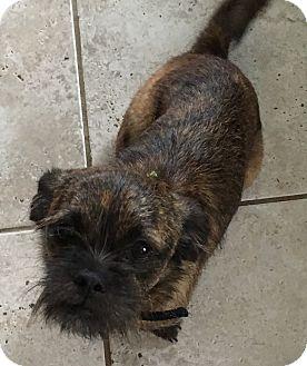 Cairn Terrier/Dachshund Mix Dog for adoption in Cincinatti, Ohio - Mia (ETAA)