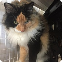 Adopt A Pet :: Squirrel - Gunnison, CO