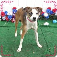 Adopt A Pet :: LUCY- also see LINUS - Marietta, GA