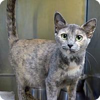 Adopt A Pet :: 10311506 - Brooksville, FL