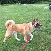 Adopt A Pet :: Netta - Toms River, NJ