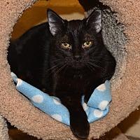 Adopt A Pet :: Trent - Cincinnati, OH