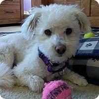 Adopt A Pet :: Posey - Pacific Grove, CA