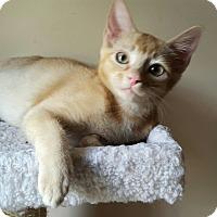 Adopt A Pet :: Sunny - Duluth, GA