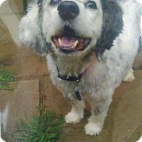 Adopt A Pet :: URGENT! - Massey - Caledon, ON