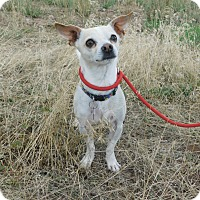 Adopt A Pet :: Harley - Ridgway, CO