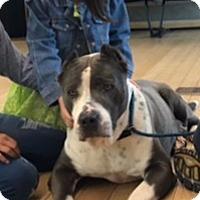 Adopt A Pet :: JAMES - Van Nuys, CA