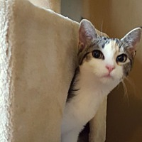 Adopt A Pet :: Tamara - Berkeley Hts, NJ