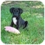 Photo 1 - Terrier (Unknown Type, Medium) Mix Puppy for adoption in Baton Rouge, Louisiana - Brady