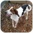 Photo 2 - Treeing Walker Coonhound Dog for adoption in Columbus, Nebraska - Joe