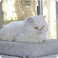 Adopt A Pet :: Sparkle - Beverly Hills, CA