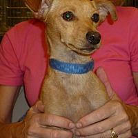 Adopt A Pet :: Buster - Fresno, CA