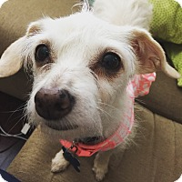 Adopt A Pet :: Camille - San Diego, CA