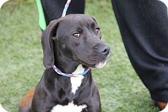 Hound (Unknown Type) Mix Dog for adoption in Greensboro, North Carolina - Wiley