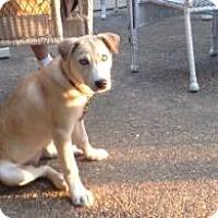 Adopt A Pet :: Odessa (adoption pending) - Rexford, NY