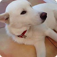 Adopt A Pet :: Kealon - Clearwater, FL