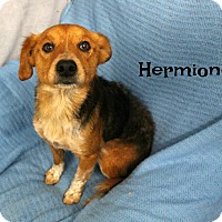 Beagle Mix Dog for adoption in Melbourne, Kentucky - Hermione