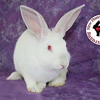 Adopt A Pet :: Turnip - Wilmington, NC