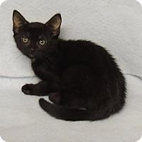 Adopt A Pet :: Emily - Rockport, TX
