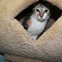Adopt A Pet :: Olive - Cuero, TX