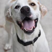 Adopt A Pet :: 10337 9091 Romeo - Erie, PA