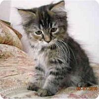 Adopt A Pet :: Andras - Riverside, RI