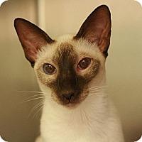 Adopt A Pet :: Abigale - Canoga Park, CA