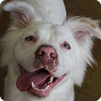 Adopt A Pet :: Vern - DEAF - pending adoption - Post Falls, ID