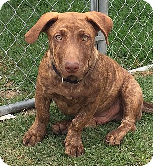 Basset Hound/Shepherd (Unknown Type) Mix Dog for adoption in Mission Viejo, California - Sky