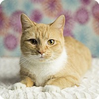 Adopt A Pet :: BUTTERCUP - Roanoke, VA