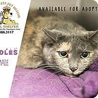Adopt A Pet :: Cuddles - Davenport, IA