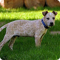 Adopt A Pet :: Squeak - ME - Warren, ME