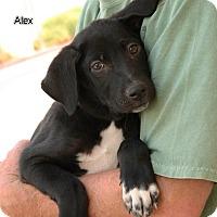 Adopt A Pet :: 6Apups - Palmdale, CA