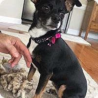 Adopt A Pet :: Missy Elliott - Pittsboro, NC