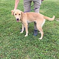 Adopt A Pet :: Mason - Batavia, OH
